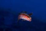 Razorfish-blue bg