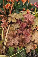 Container of colorful foliage and flowers, with bronze leaves of Heuchera 'Ginger Peach'