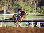 October 28, 2014: V.E. Day works in preparation for the Breeders' Cup Classic at Santa Anita Park in Arcadia, California on October 28, 2014. Zoe Metz/ESW/CSM