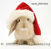 Kim, CHRISTMAS ANIMALS, photos, GBJBWP27654,#XA# stickers