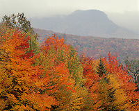 Forest in fall color in a rainstorm; White Mountains National Forest, NH
