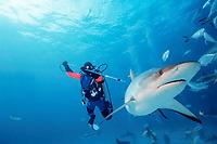 scuba diver Gary Adkison tags a Caribbean reef shark, Carcharhinus perezii, Walker's Cay, Bahamas, Atlantic Ocean