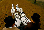 Training horses for royal carriage driving very early morning Rotten Row, Hyde Park. London 1991 1990s London UK