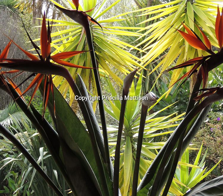 Waiheke Island, New Zealand - September 19, 2012:  Lights and shadow on birds of paradise flowers.