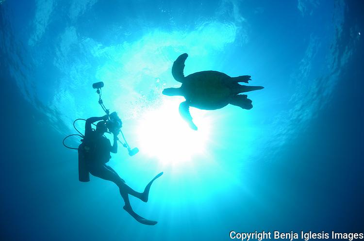 Photographer with green sea turtle.Chelonia Mydas.Maui hawaii.