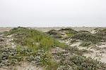 Orond Beach Dune
