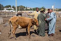 Morocco.  Farmers Discuss the Sale of a Cow.  Had Draa Market, Essaouira Province.
