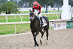 January 16, 2016: Chocolate Ride with Florent Geroux up heads to the winners circle after winning the Col. E.R. Bradley Handicap race in New Orleans Louisiana. Steve Dalmado/ESW/CSM