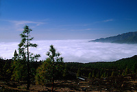 Spanien, Kanarische Inseln, La Palma, Vulkanlandschaft bei Refugio El Pilar
