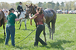 25 Apr 2009: Cooling down a race horse on a hot day at the Foxfield Races in Charlottesville, Virginia.