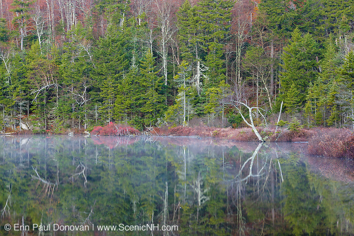 Reflection of trees in Upper Hall Pond in Sandwich, New Hampshire. This is a secluded pond located off of Sandwich Notch Road.