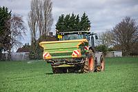 Applying nitrogen onto wheat - Lincolnshire, March