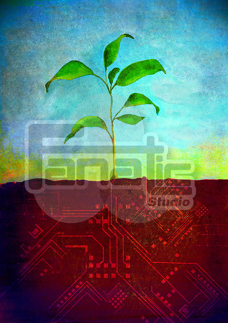 Plant growing on a computer board