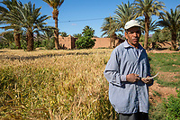Draa River Valley, Morocco.  Berber Farmer with Sickle for Cutting his Wheat.