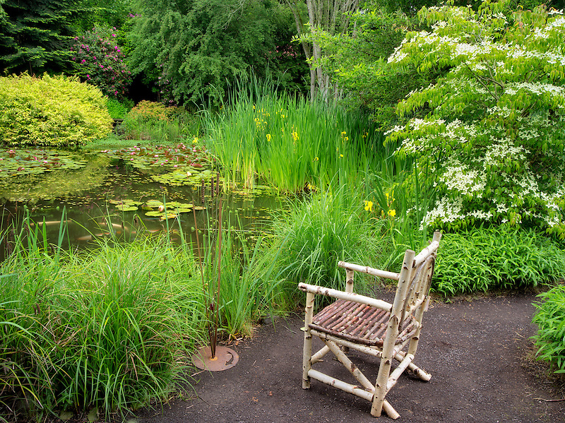 Wood chair and pond. Hughes Water Gardens, Oregon
