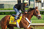 Mucho Macho Man on the Churchill Downs track on April 30, 2011.