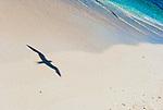 Cook Island bird sanctuary Christmas Island(Kiritimati), Kiribati