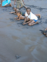 local children watch leatherback sea turtle hatchling, Dermochelys coriacea, run to sea, Dominica, West Indies, Caribbean, Atlantic