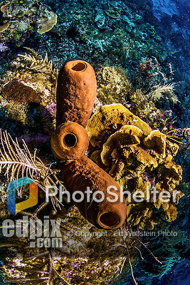 12 June 2014: Tube Sponges are seen on the reef at Conch Pointe, on the North Shore of Grand Cayman Island. Located in the British West Indies in the Caribbean, the Cayman Islands are renowned for excellent scuba diving, snorkeling, beaches and banking.  Mandatory Credit: Ed Wolfstein Photo *** RAW (NEF) Image File Available ***