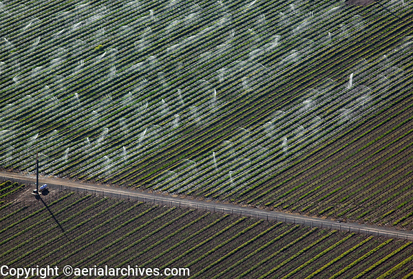 aerial photograph of sprinkler irrigation in the Central Valley California