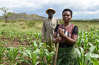 TANSANIA, Tarime Distrikt, Dorf Nyakunguru , Hintergrund Acacia Gold Mine, Mary Mugesi Chacha, 40 Jahre, und ihr Mann Mugesi Chacha bei Arbeit im Maisfeld