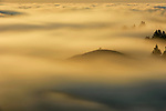 Pictured: Hikers shrouded by fog at Mount Tamalpais State Park, California, USA.<br /> <br /> Amazing aerial photos show off the majesty of America's landscape, its architecture, its industry and its wildlife.   From the startling blue potash pools of Utah to hundreds of aircraft sitting unused due to the pandemic, the images display a little seen side of the USA.<br /> <br /> Other images include a passenger plane plane as it touches down in California taken 4,500ft above it, fog over the Golden Gate Bridge and a solar farm in Nevada.   Professor of Music Jassen Todorov, from San Francisco, captured the striking pictures of the American West while flying in a light aircraft.   SEE OUR COPY FOR DETAILS<br /> <br /> Please byline: Jassen Todorov/Solent News<br /> <br /> © Jassen Todorov/Solent News & Photo Agency<br /> UK +44 (0) 2380 458800