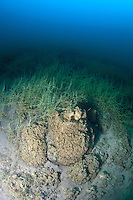 Reef structures formed by microbiaites, an acient lifeform still found in Pavilion  Lake, British Columbia, Canada.