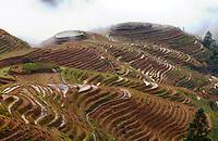 Asia,Cina ,Guizhou,Tang An,terrace rice fields in winter ,China minority