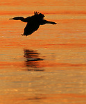 Wildlife wake up to the sunrise in Sausalito harbor in Sausalito, California.