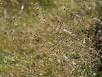 The coming and going of bees during a massive return to the hive. A bee transports 20 to 30 milligrams of nectar and carries out 3 to 10 flights per day during 10 to 20 days of activity. A hive has between 100,000 and 200,000 foraging bees and thus harvests between 60 kilos and 300 kilos of honey per year.<br /> Va et viens des abeilles lors d'un retour massif à la ruche. Une abeille transporte de 20 à 30 milligrammes de nectar et effectue de 3 à 10 vols par jour pendant 10 et 20 jours d'activité. Une ruche a entre 100 000 et 200 000 butineuses et récolte ainsi entre 60 kilos et 300 kilos de miel par an.