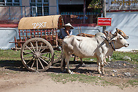 Myanmar, Burma.  Mingun, near Mandalay.  Ox-drawn Taxi Waits for Future Passenger on a Street in Mingun.