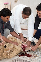 Tripoli, Libya - Eid al-Adha, Id al-Adha.  Sacrificing Sheep for the annual feast when Muslims commemorate God's mercy in allowing Abraham to sacrifice a ram instead of his son, to prove his faith.