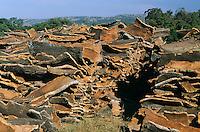 Korkeiche, Kork-Eiche, Kork, Korken, Korkgewinnung, Korkernte, Korkrinde, Rinde, Borke, Quercus suber, Cork oak, cork tree, cork