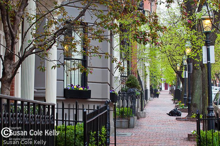Spring blossoms on Beacon Hill, Boston, MA, USA