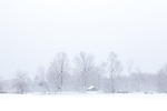 A snowy pasture and a filigree of maples in Hollis, NH, USA