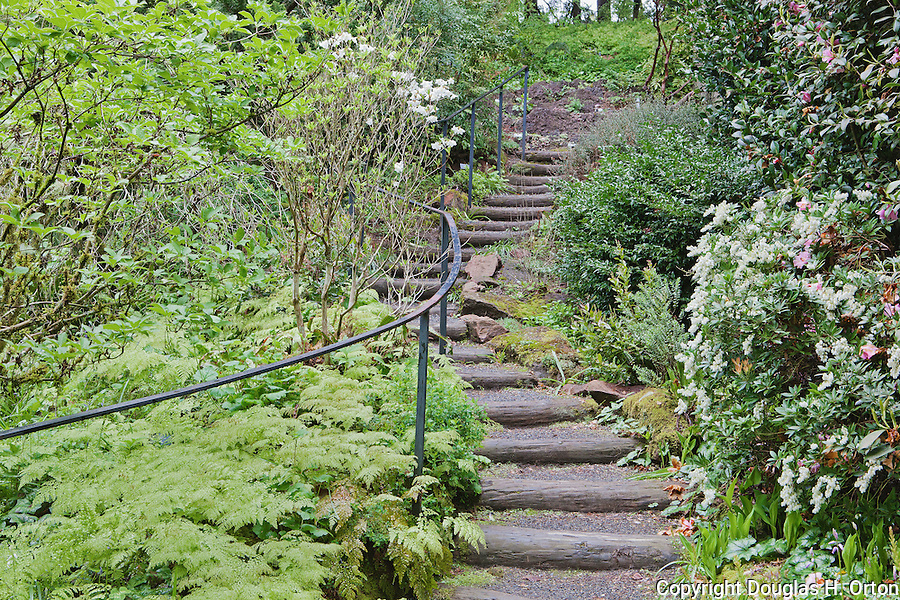 """Log stairway with iron handrail winds into forest at """"Portland's Secret Garden"""",  Leach Garden was established by JOhn and Lilla Leach in the 1930's.  The Garden continues as a public place of respite and native northewest botanical display.  Operated by the city of Portland, Oregon.."""