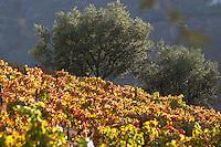 autumn colours vineyards quinta do infantado douro portugal
