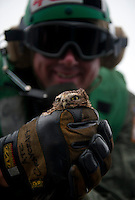 110923-N-DR144-826 PACIFIC OCEAN (Sept. 23, 2011) Chief Aviation Electronics Technician Michael Craycraft holds an owl he rescued from a deck edge scupper on the flight deck aboard Nimitz-class aircraft carrier USS Carl Vinson during flight operations. Craycraft has arranged to have the wayward owl flown back to California via Carrier Onboard Delivery aircraft. Carl Vinson and Carrier Air Wing 17 are underway conducting operations off the coast of Southern California.  U.S. Navy photo by Mass Communication Specialist 2nd Class James R. Evans (RELEASED)