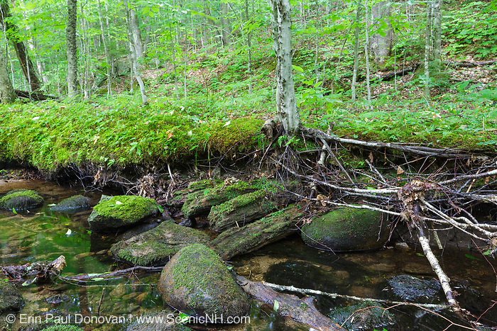 A section of the Walker Brook Branch of the Gordon Pond Railroad (logging railroad, 1907-1916) in Woodstock, New Hampshire during the summer months. The railroad traveled very close to the brook in this location. Take note to the corduroyed logs.