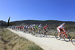 The peloton tackle Sector 2 Vidritta of gravel during the 2015 Strade Bianche Eroica Pro cycle race 200km over the white gravel roads from San Gimignano to Siena, Tuscany, Italy. 7th March 2015<br /> Photo: Eoin Clarke/www.newsfile.ie