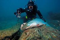 Shark fishing, shark finning, Finned Hammerhead shark, Sphyrna lewini, Mexico, Pacific Ocean
