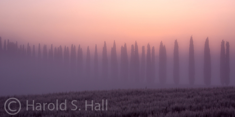 The well known cypress trees of Tuscany line the a dirt road leading to a farm.  The morning sun is beginning to work its way through the fog that so often covers this landscape.