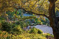 Debra Lee Baldwin backyard hillside patio succulent garden framed by Engelmann Oak (Quercus engelmannii)  tree in early morning light