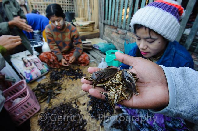 Women selling water bugs in market at Mrauk-U. Rakhine State, Myanmar.