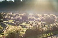 France, Indre-et-Loire (37), Chenonceaux, château de Chenonceau, le jardin de Diane de Poitiers avec herbe aux écouvillons (Pennisetum setaceum 'rubrum')