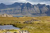 Blick über Tundra und Tümpel mit Wollgras, Island, Ostisland, im Osten von Island zwischen Stöðvarfjörður, Stödvarfjördur und Breiðdalsvík, Breiddalsvík, im Hintergrund Berge der Halbinsel Kambanes