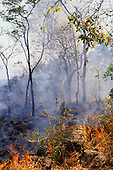 Kasanga, Tanzania. Burning vegetation in slash-and-burn agriculture.