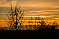 The bare branches of a tree and bushes stand in silhouette against cloud streaked sky glowing orange at sunset on the last day of 2020.