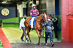 February 28, 2021: Finite #3 , ridden by Ricardo Santana, Jr. in the Bayakoa Stakes (Grade 3) for trainer Steven M. Asmussen at Oaklawn Park in Hot Springs,  Arkansas. Ted McClenning/Eclipse Sportswire/CSM