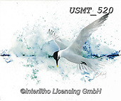 Malenda, REALISTIC ANIMALS, REALISTISCHE TIERE, ANIMALES REALISTICOS, paintings+++++,USMT520,#a#, EVERYDAY